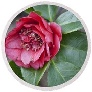 Red Camellia Squared Round Beach Towel