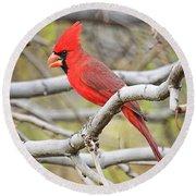 Red Cardinal  Round Beach Towel