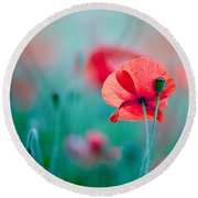 Red Corn Poppy Flowers 04 Round Beach Towel