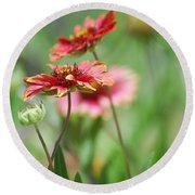 Red Daisies  Round Beach Towel