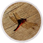 Red Dragon Fly Round Beach Towel by LeeAnn McLaneGoetz McLaneGoetzStudioLLCcom