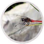 Red Dragonfly 2 Round Beach Towel