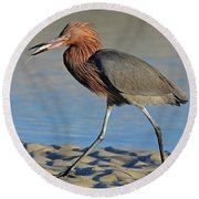 Red Egret With Fish Round Beach Towel