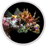 Red Eyed Scorpion Fish Round Beach Towel