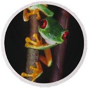 Red-eyed Tree Frog Agalychnis Callidryas Round Beach Towel