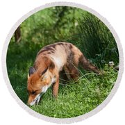 Red Fox Round Beach Towel