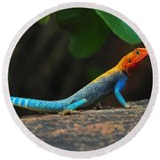 Red-headed Agama Round Beach Towel