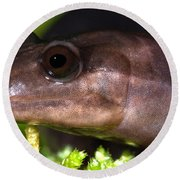 Red Hills Salamander Round Beach Towel