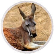 Red Kangaroo Round Beach Towel