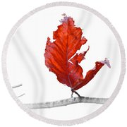 Red Leaf Of Autumn On White Round Beach Towel