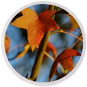 Red Leaves In Winter Sunset Round Beach Towel
