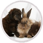 Red Merle Toy Poodle Pup, Guinea Pig Round Beach Towel