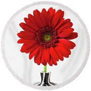Red Mum In Striped Vase Round Beach Towel