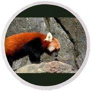 Red Panda Round Beach Towel