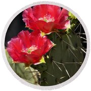 Red Prickly Pear Cactus  Round Beach Towel