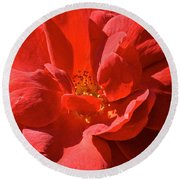 Red Rose Summer Round Beach Towel