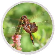 Red Saddlebag Dragonfly In The Marsh Round Beach Towel