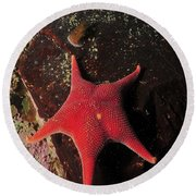 Red Sea Star And Limpet On Brown Rock Round Beach Towel