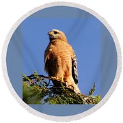 Pismo Beach Red Shoulder Hawk Round Beach Towel