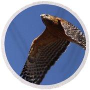 Red-shouldered Hawk - Apache Round Beach Towel