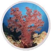 Red Soft Coral,  Australia Round Beach Towel