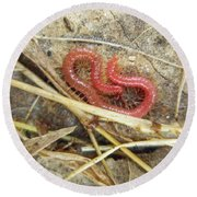 Red Soil Centipede - Strigamia Round Beach Towel