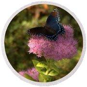 Red Spotted Purple Butterfly On Sedum Round Beach Towel