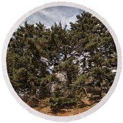 Red Spruce On Whitetop Mountain Round Beach Towel
