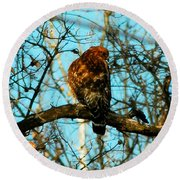 Red Tail Hawk Visitor Round Beach Towel