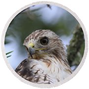 Red-tailed Hawk Has Superior Vision Round Beach Towel