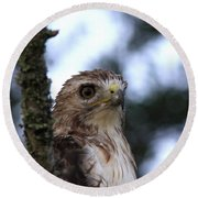 Red-tailed Hawk - Hawkeye Round Beach Towel