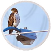 Red-tailed Hawk Perched Round Beach Towel