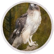 Red Tailed Hawk Perched On A Branch In The Woodlands Round Beach Towel