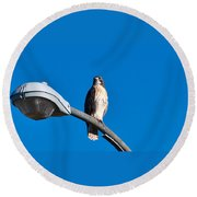 Red-tailed Hawk Surveying Territory Round Beach Towel