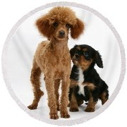 Red Toy Poodle And Cavalier King Round Beach Towel