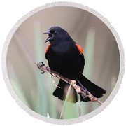 Red-winged Blackbird - Are You Listening Round Beach Towel