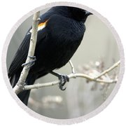 Red-winged Blackbird Agelaius Round Beach Towel