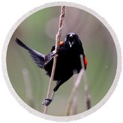 Red-winged Blackbird - Can You Hear Me Now Round Beach Towel