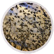 Red-winged Blackbirds At Sunset Round Beach Towel