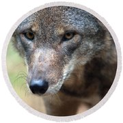 Red Wolf Closeup Round Beach Towel