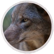 Red Wolf Stare Round Beach Towel