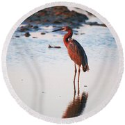 Reddish Egret Basking In The Sunset Round Beach Towel
