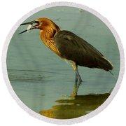 Reddish Egret Caught A Fish Round Beach Towel