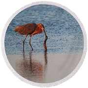 Reddish Egret Checking It Out Round Beach Towel