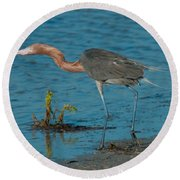 Reddish Egret Hunting Round Beach Towel