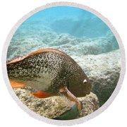 Redlip Parrotfish Round Beach Towel
