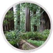 Redwood National Park, California Round Beach Towel