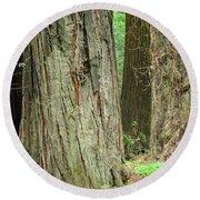 Redwood Trees Art Prints Big California Redwoods Round Beach Towel