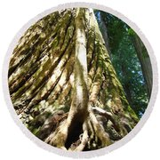 Redwood Trees Forest Art Prints Redwoods Round Beach Towel
