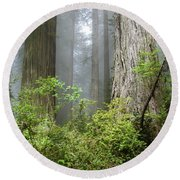 Redwoods In May Round Beach Towel